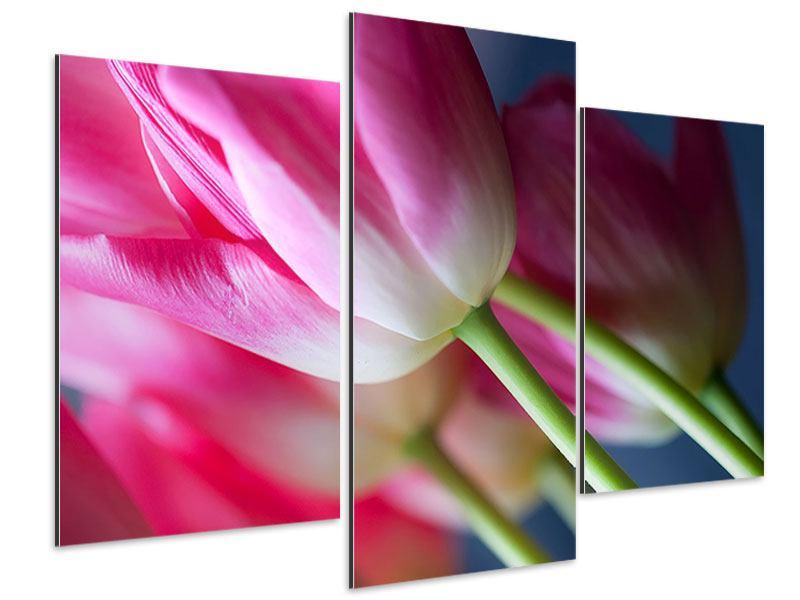 Aluminiumbild 3-teilig modern Makro Tulpen