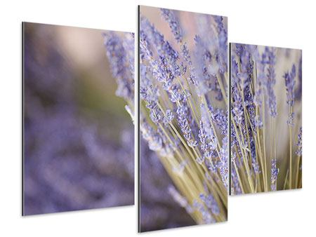 Aluminiumbild 3-teilig modern Lavendel XXL