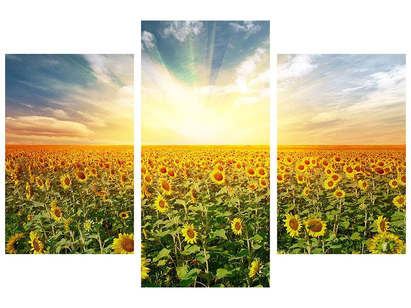 Aluminiumbild 3-teilig modern Ein Feld voller Sonnenblumen