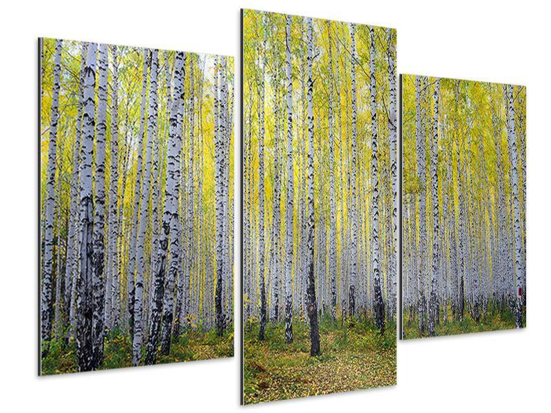 Aluminiumbild 3-teilig modern Herbstlicher Birkenwald