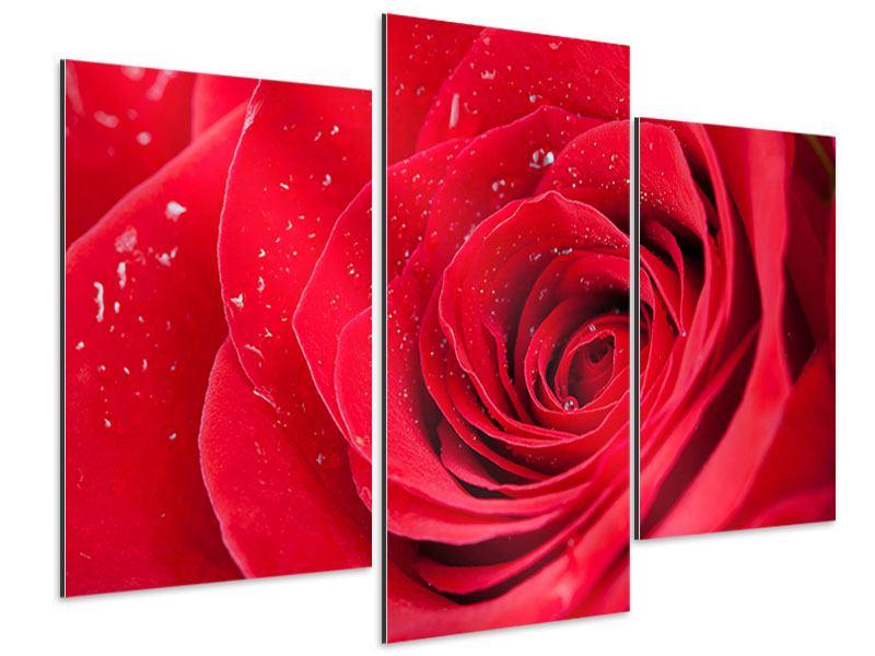 Aluminiumbild 3-teilig modern Rote Rose im Morgentau
