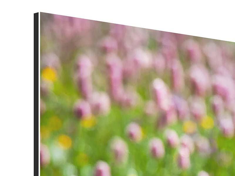 Aluminiumbild 3-teilig modern Der Wiesenklee