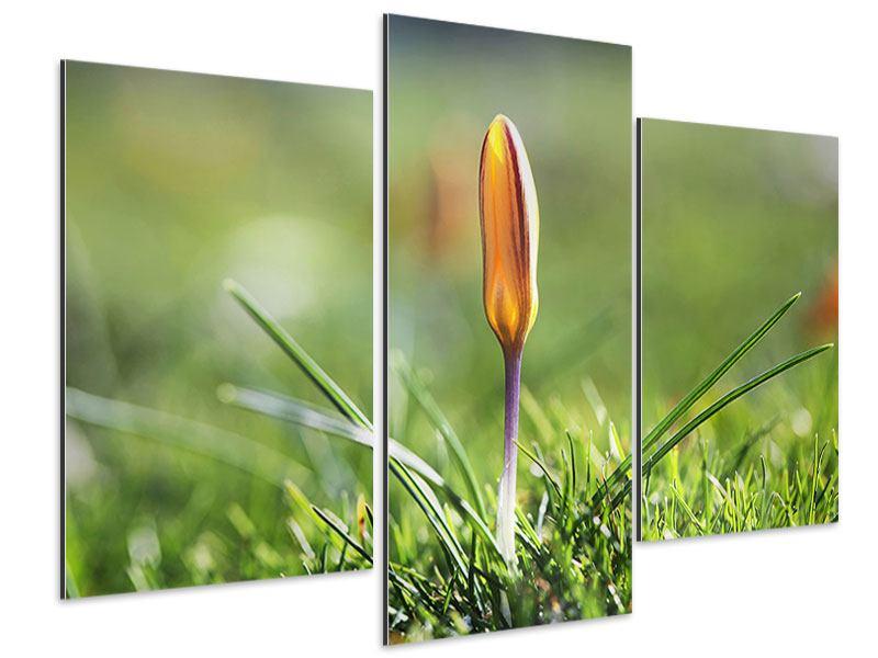 Aluminiumbild 3-teilig modern Die Blütenknospe