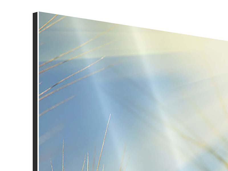Aluminiumbild 3-teilig modern König des Getreides