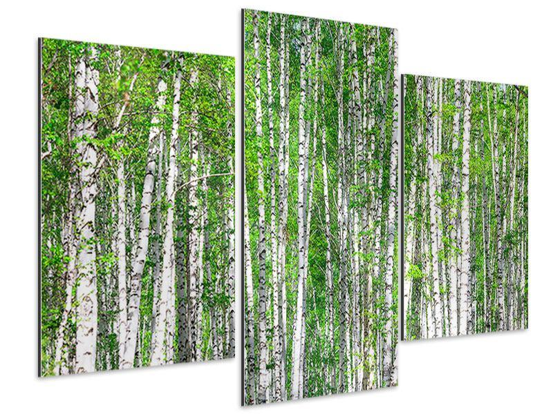 Aluminiumbild 3-teilig modern Der Birkenwald