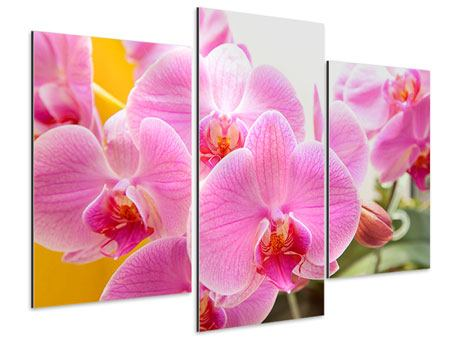 Aluminiumbild 3-teilig modern Königliche Orchideen