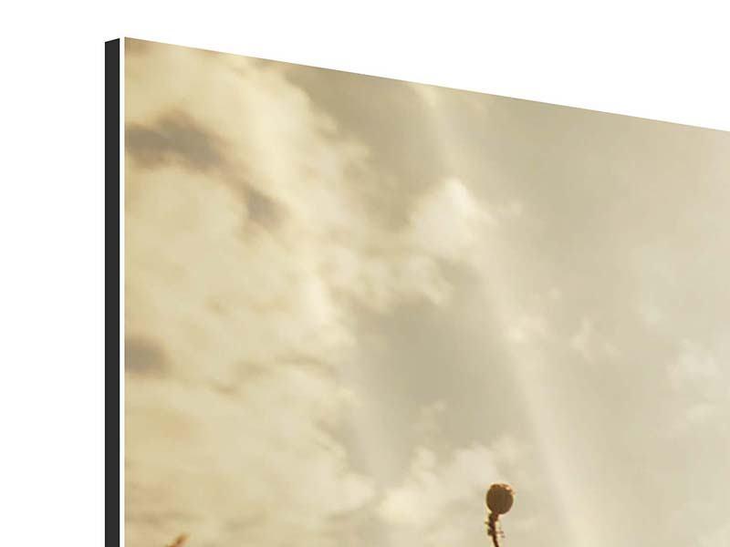 Aluminiumbild 3-teilig modern Das Mohnfeld bei Sonnenaufgang