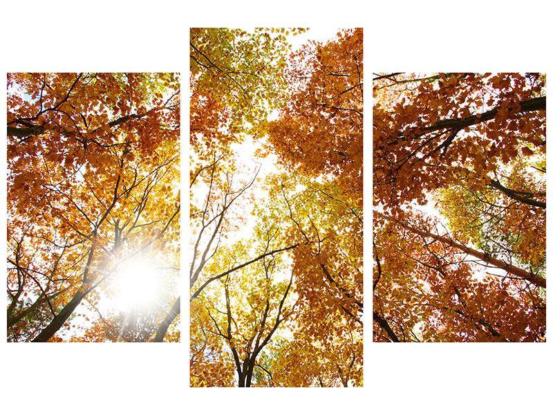 Aluminiumbild 3-teilig modern Herbstbäume