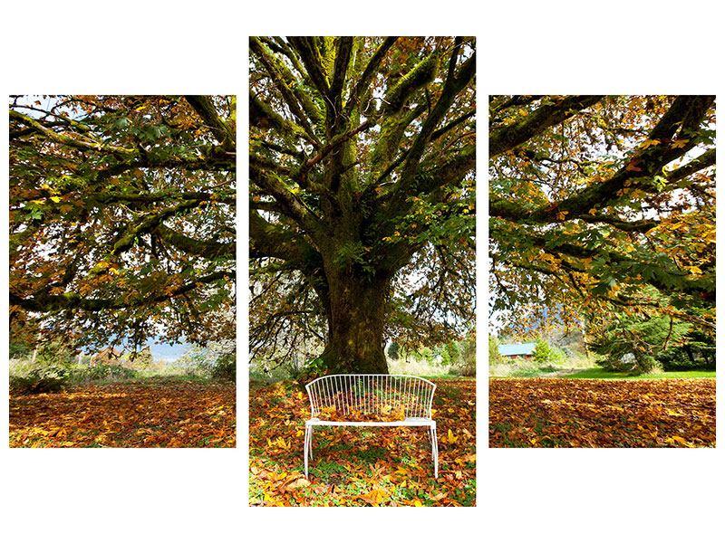 Aluminiumbild 3-teilig modern Mein Lieblingsbaum