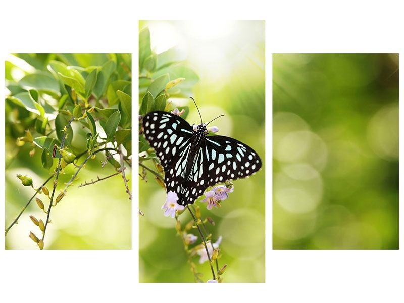 Aluminiumbild 3-teilig modern Papilio Schmetterling XXL
