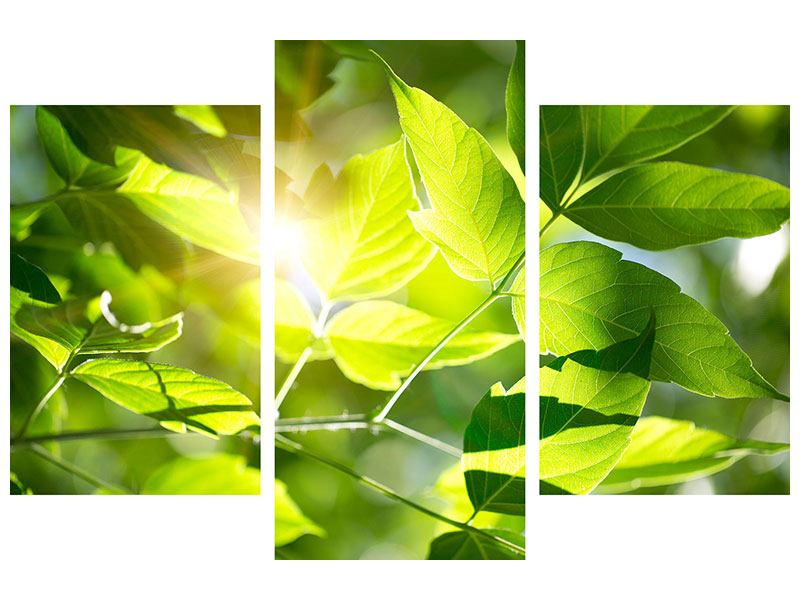 Aluminiumbild 3-teilig modern Es grünt so grün