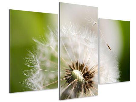 Aluminiumbild 3-teilig modern Pusteblume Löwenzahn