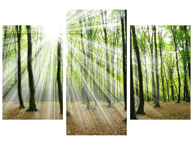 Aluminiumbild 3-teilig modern Magisches Licht in den Bäumen