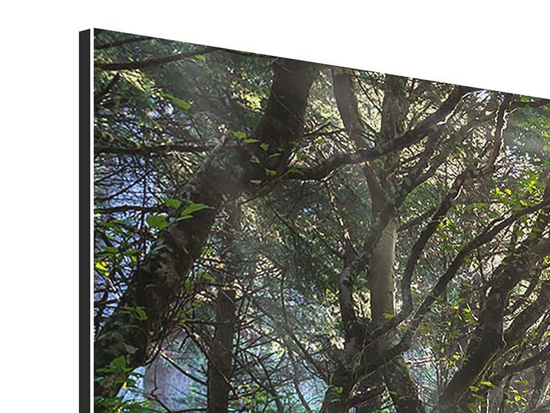 Aluminiumbild 3-teilig modern Sonniger Waldweg
