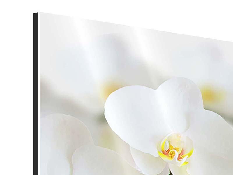 Aluminiumbild 3-teilig modern Weisse Orchideen