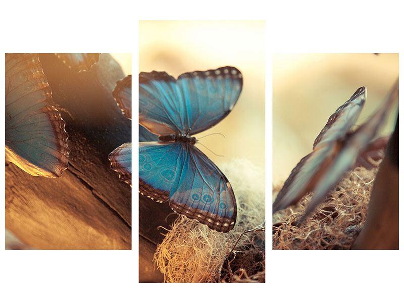 Aluminiumbild 3-teilig modern Schmetterlinge