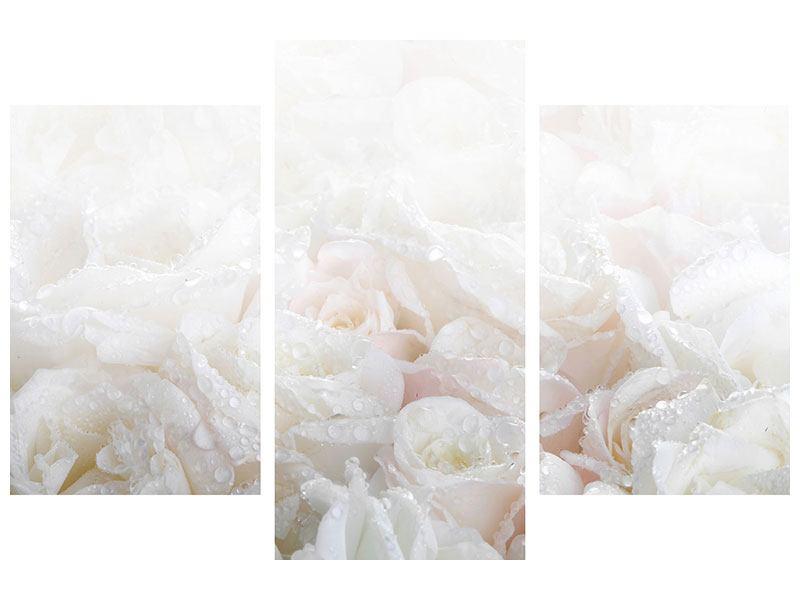Aluminiumbild 3-teilig modern Weisse Rosen im Morgentau
