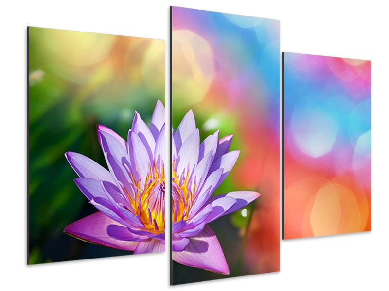 Aluminiumbild 3-teilig modern Colored Lotus