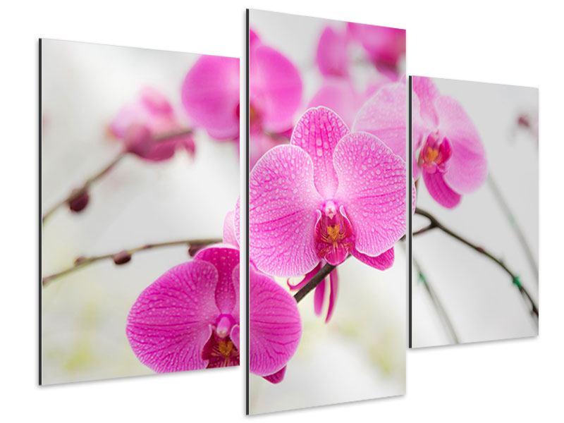 Aluminiumbild 3-teilig modern Das Symbol der Orchidee