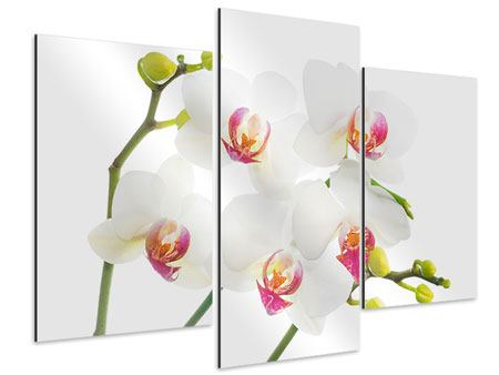 Aluminiumbild 3-teilig modern Orchideenliebe