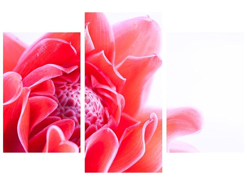 Aluminiumbild 3-teilig modern Etlingera XXL