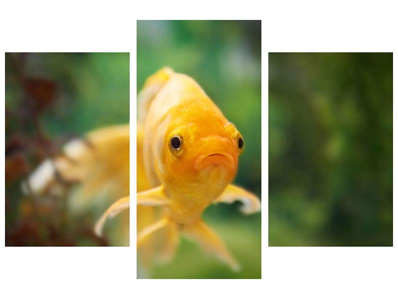 Aluminiumbild 3-teilig modern Der Fisch