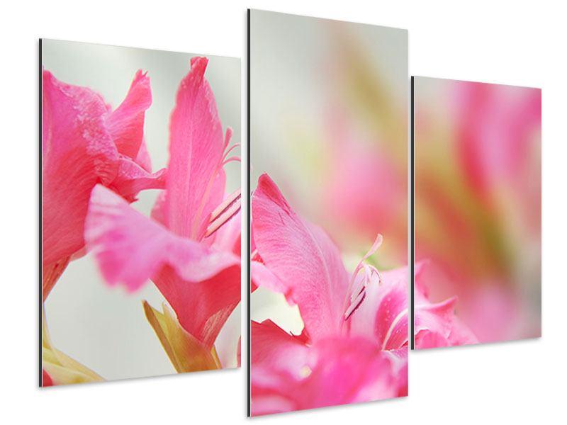 Aluminiumbild 3-teilig modern Gladiolen