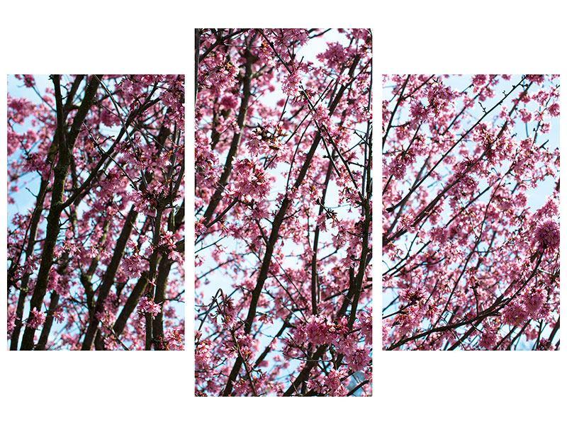 Aluminiumbild 3-teilig modern Japanische Blütenkirsche