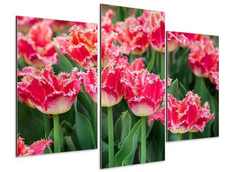 Aluminiumbild 3-teilig modern Die Tulpenwiese