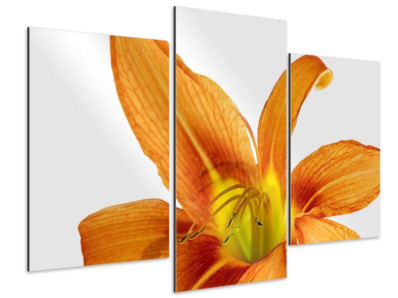 Aluminiumbild 3-teilig modern Die Tiger-Lilie