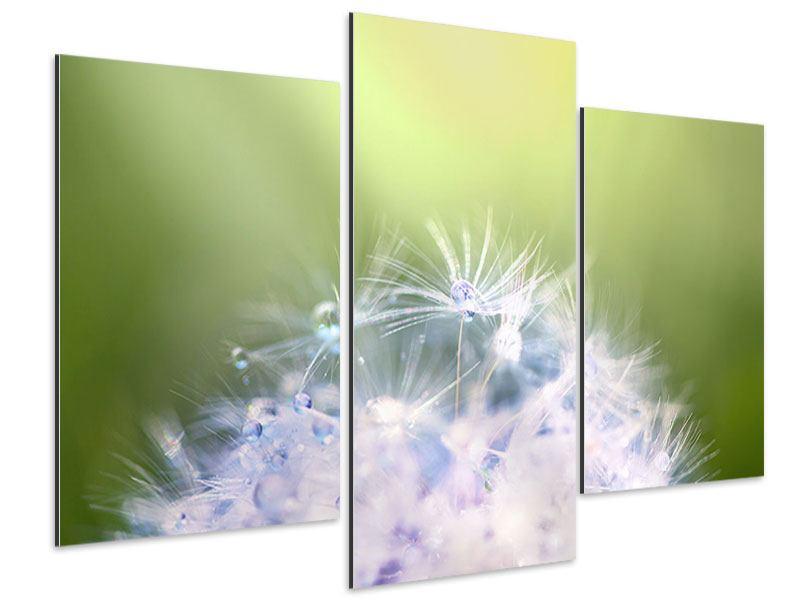 Aluminiumbild 3-teilig modern Pusteblume XL im Morgentau