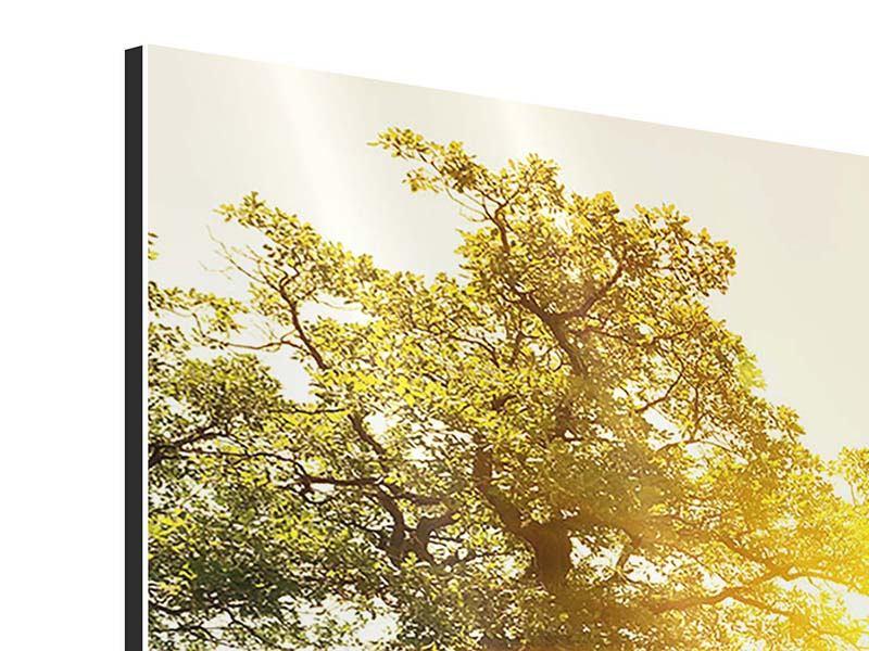 Aluminiumbild 3-teilig modern Sonnenuntergang in der Natur