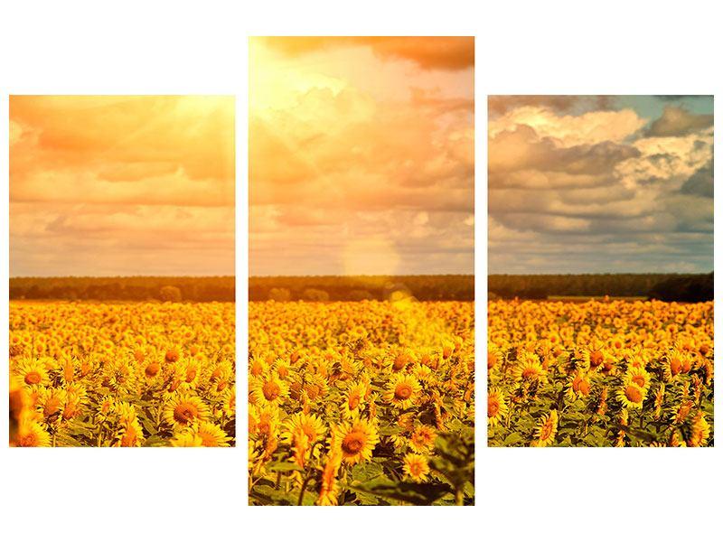 Aluminiumbild 3-teilig modern Goldenes Licht für Sonnenblumen