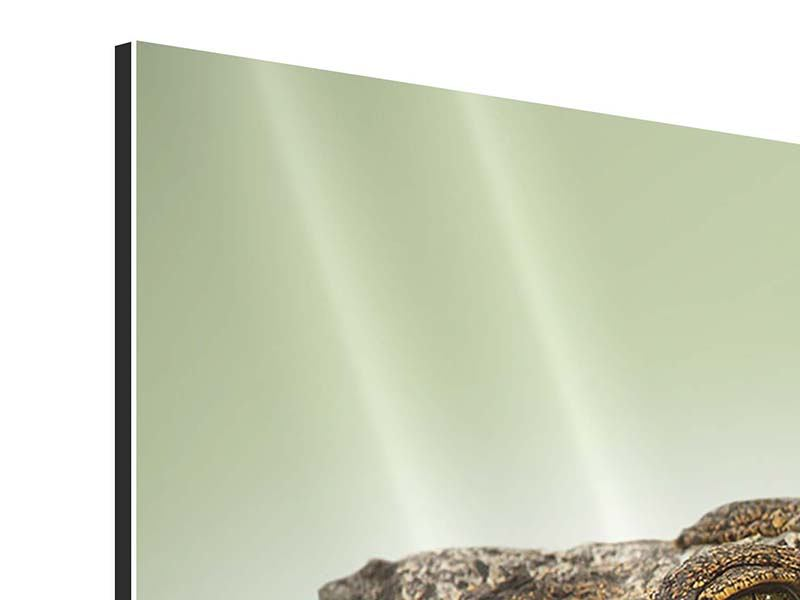 Aluminiumbild 3-teilig modern Close Up Alligator