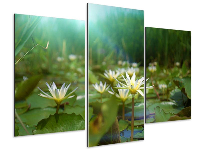 Modern 3 Piece Aluminium Print Waterlily Pond