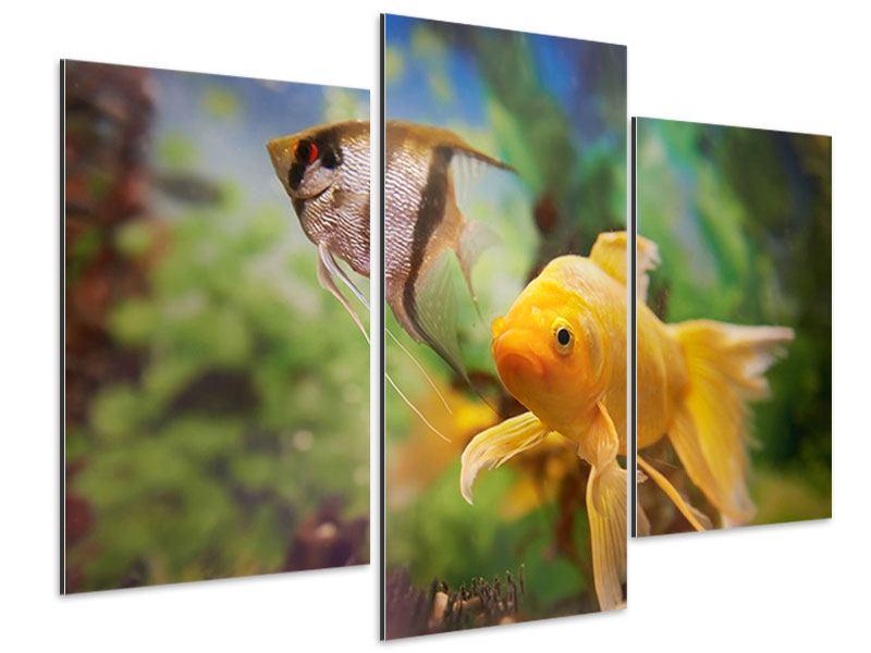 Aluminiumbild 3-teilig modern Bunte Fische