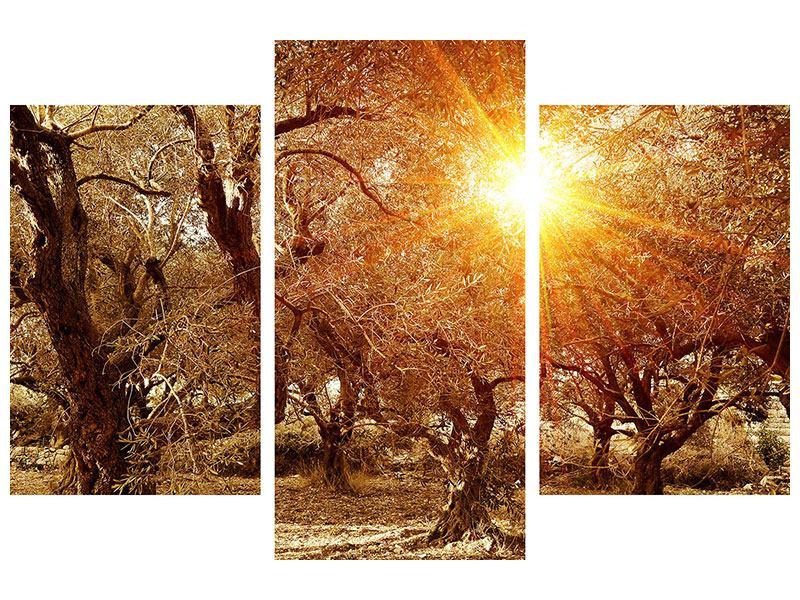 Aluminiumbild 3-teilig modern Olivenbäume im Herbstlicht
