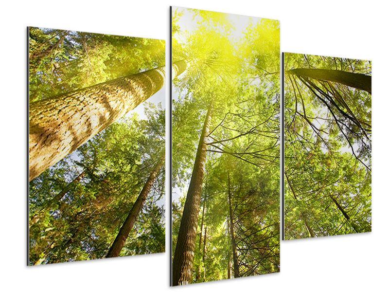 Aluminiumbild 3-teilig modern Baumkronen in der Sonne
