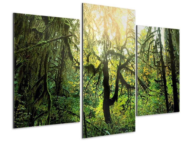 Aluminiumbild 3-teilig modern Verträumter Wald
