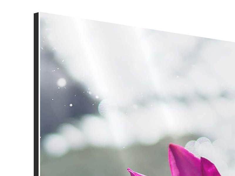 Aluminiumbild 3-teilig modern Seerosenduo in Pink