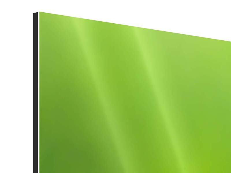 Aluminiumbild 3-teilig modern Libelle XXL