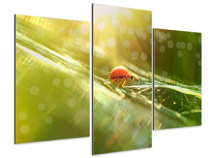 Aluminiumbild 3-teilig modern Marienkäfer im Sonnenlicht