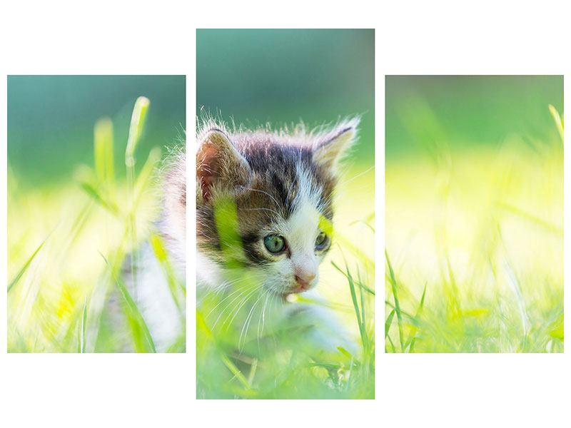Aluminiumbild 3-teilig modern Kitten
