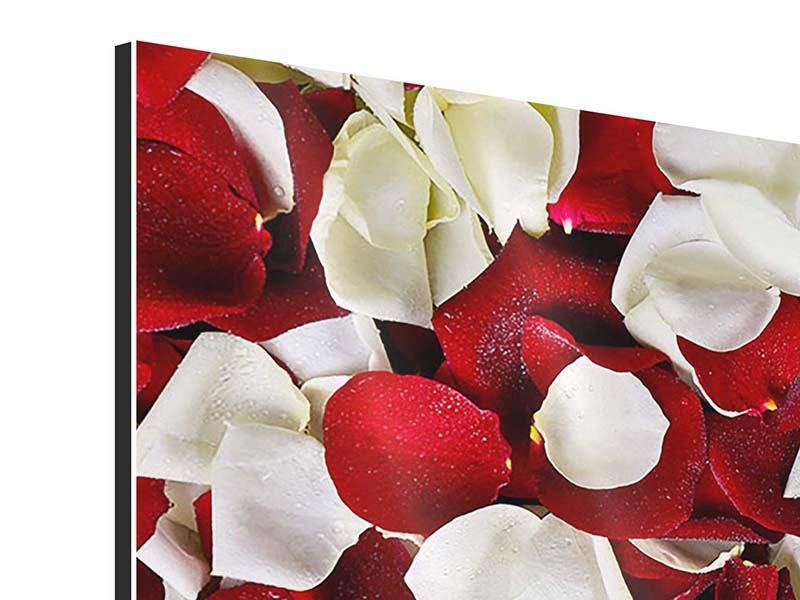Aluminiumbild 3-teilig modern Rosenblätter