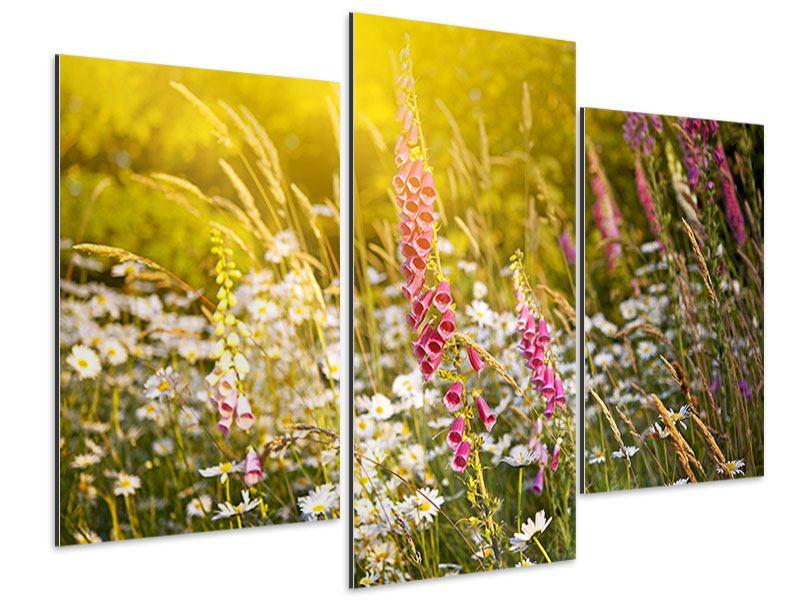 Aluminiumbild 3-teilig modern Sommerliche Blumenwiese