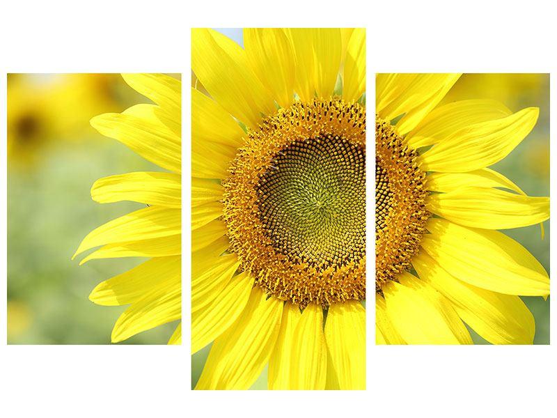 Aluminiumbild 3-teilig modern Die Blume der Sonne