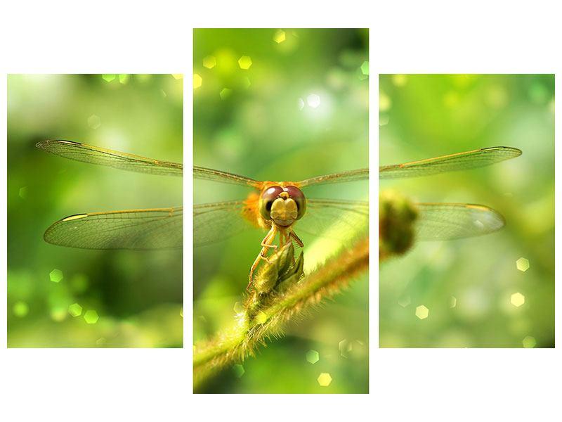 Aluminiumbild 3-teilig modern XXL-Libelle