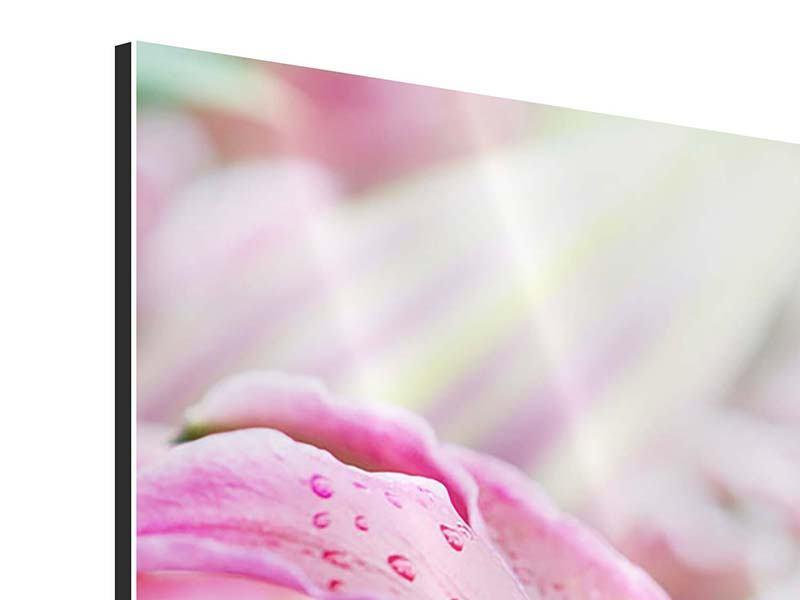 Aluminiumbild 3-teilig modern Lilien im Tau
