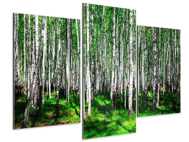 Aluminiumbild 3-teilig modern Sommerlicher Birkenwald