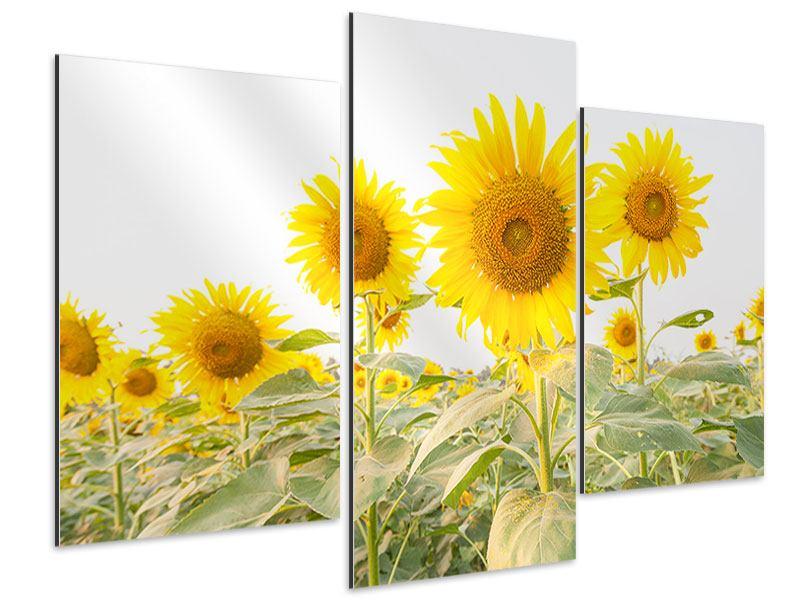 Aluminiumbild 3-teilig modern Das Sonnenblumenfeld